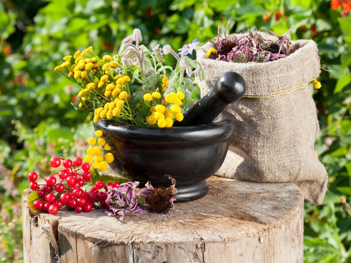Какие-растения-называют-лекарственными