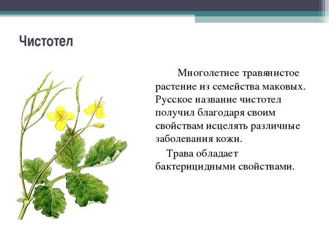 chistotel-dlya-lecheniya-gribka-kozhi