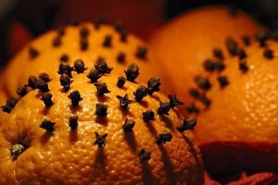 apelsin-i-gvozdika-ot-moshek